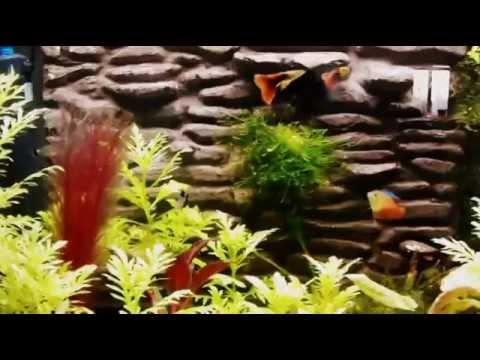 DIY rock wall for fish tank