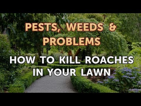 How to Kill Roaches in Your Lawn