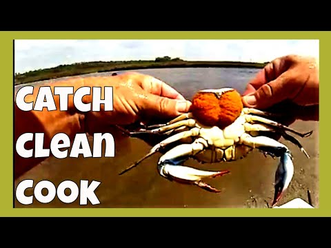 Catch Clean Cook and Eat Blue Crabs