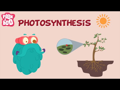 Photosynthesis | The Dr. Binocs Show | Learn Videos For Kids