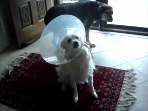 Alternative to Elizabethan Collar - Scrubs for Pets - ecollar  alternative