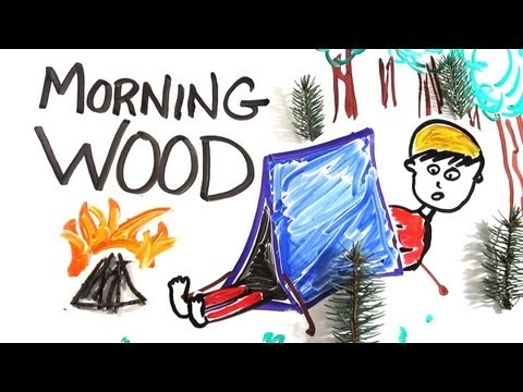 The Science of 'Morning Wood'