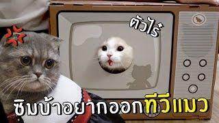 ซิมบ้า&นาซ่าอยากออกทีวีแมว