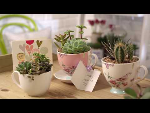 How to make a teacup succulent garden for Mother's Day