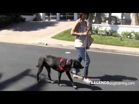 Leash Training: Teach Your Dog to Heel on Leash