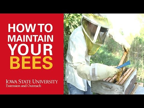 How to Maintain Your Bees Keeping Them Happy and Healthy