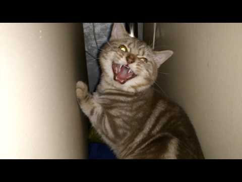 6 Signs Your Cat Is Angry