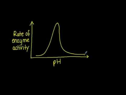 3.6.3 Explain factors affecting enzyme activity