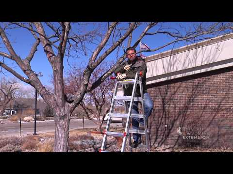 Large Tree Pruning | From the Ground Up