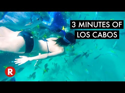 3 Minutes of Cabo // Travel to Cabo San Lucas, Mexico 🇲🇽