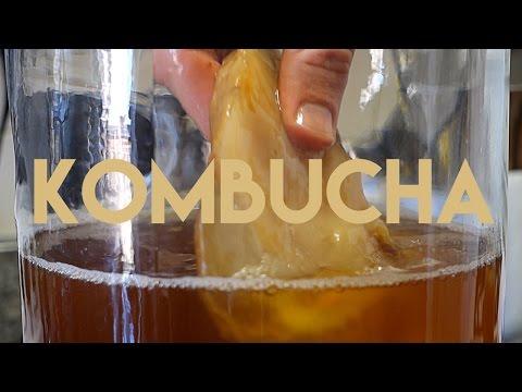 Beginners Guide To Fermentation: Kombucha Making