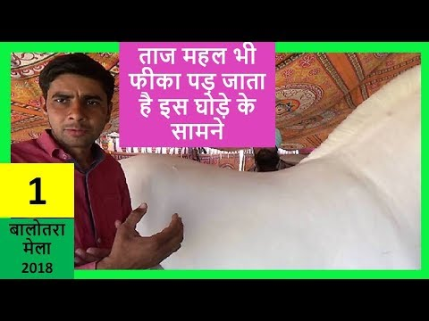 बादल - Indian White Horse _ Balotra Cattle Fair - Sell Horses Online , India