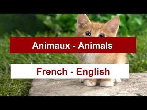 learn the animals in FRENCH. how to pronounce  the most common animals