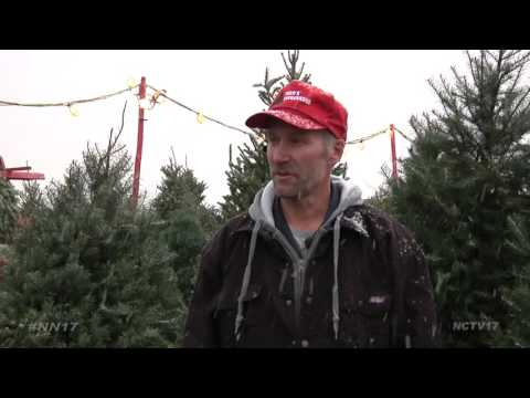 Guide to Buying the Perfect Christmas Tree