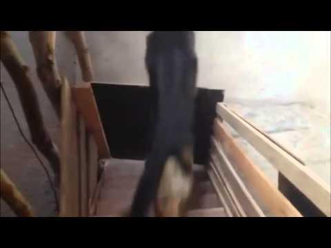 Dog Jumping Over Gate FAIL    KARMA