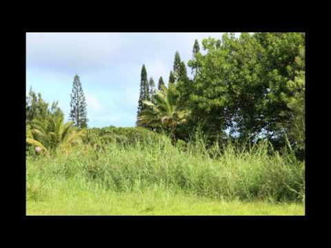 Buying Land to Build Your Dream Home