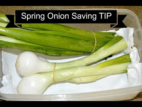 Spring onion saving tip. How to store Spring green Onion by Chawla's Kitchen