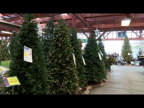 Christmas Trees at English Gardens