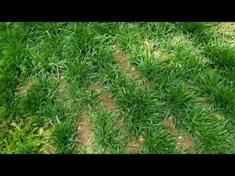 DLC - 2 Month Lawn Update