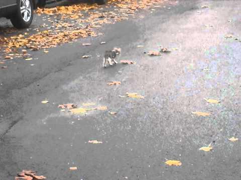 Lost kitten in the street - Kiley