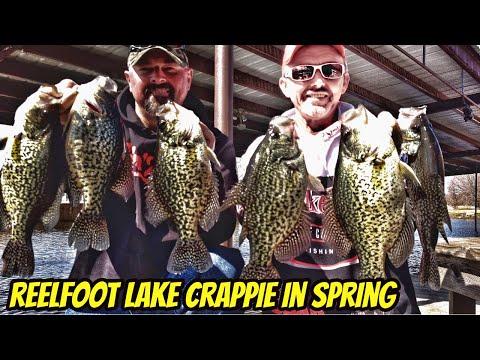 Big black crappie of spring-Reelfoot Lake TN-Krappie Kings S2 eps07
