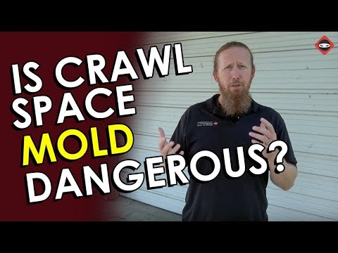 Is Crawl Space Mold Dangerous? | How Bad is the Mold in Crawl Space?