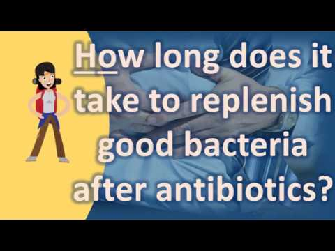How long does it take to replenish good bacteria after antibiotics ? | Health FAQs