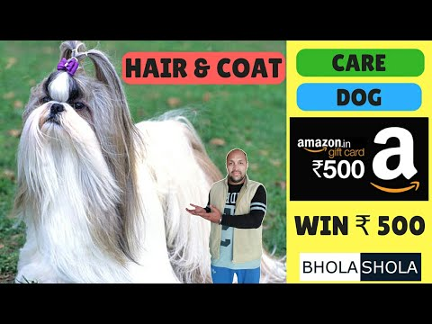 Pet Care - Care Dog Hair & coat - Bhola Shola