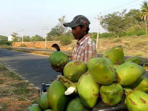 India Cuisine: Roadside Coconuts