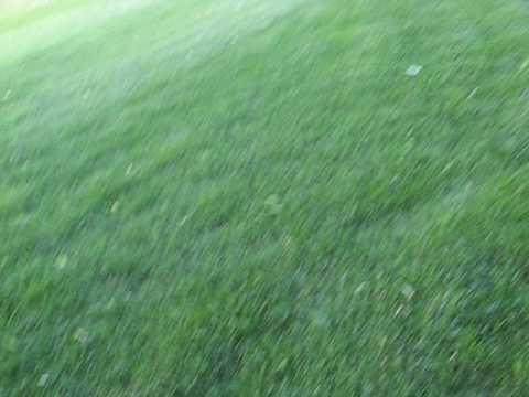 thick, green grass