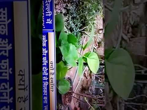 Air purifiers plants ,,Air pollution reduce plant at home