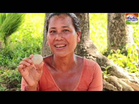 MAKING OF TRIBAL ALCOHOL | आदिवासी दारू बनाने का तरीका | RABHA TRIBALS | INDIA | INDIA UNPLUGGED