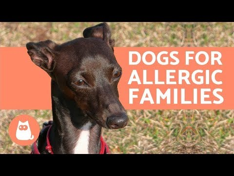 10 Hypoallergenic Dog Breeds for Allergic Families