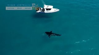 Drone spots enormous great white shark in Esperance, Western Australia