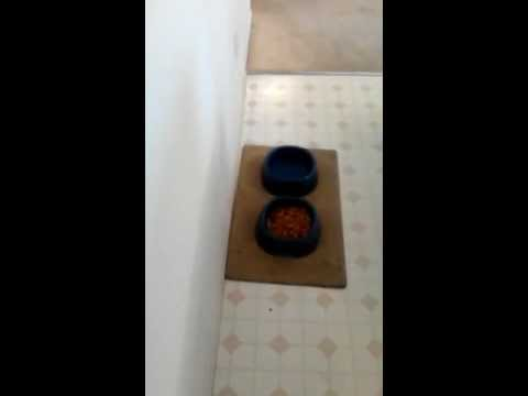 How to fill up Buster the dogs food bowl