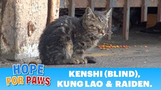 Blind kitten sits in a parking lot and wonders how will she survive in this world.
