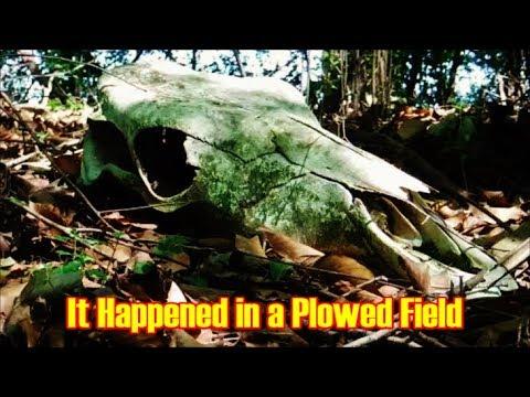 Arrowhead Hunting - It Happened in a Plowed Field