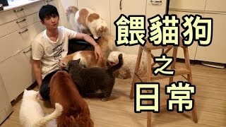 Hay&Pet - 每天餵貓狗之日常慘況 (新成員Mimi, MiuMiu)