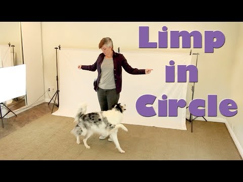 Limp in a Circle - Dog Tricks Training
