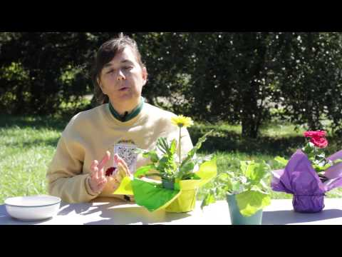 How to Cure Gerbera Daisy Fungus : Gerbera Plant Care