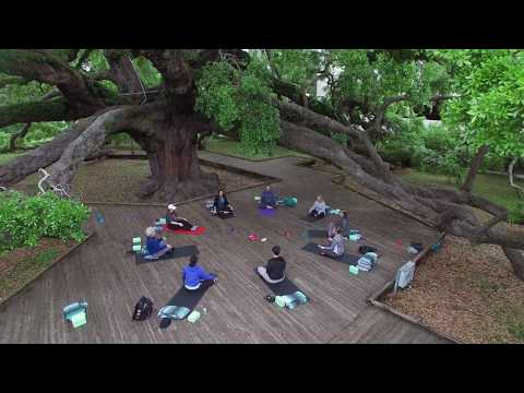 Yoga at Treaty Oak Park