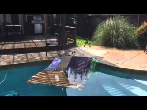 How To Remove Baby Ducks From Your Swimming Pool