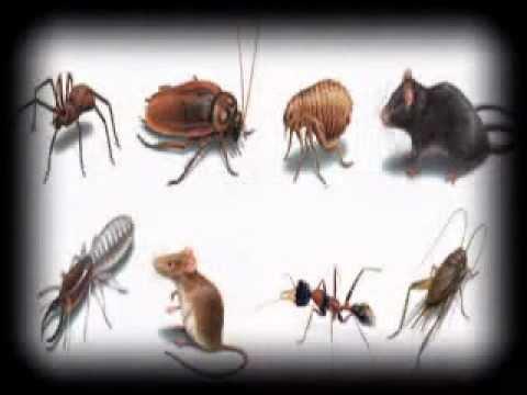 Pest Control in London   0203-475-2959   24 hour Pest Control London