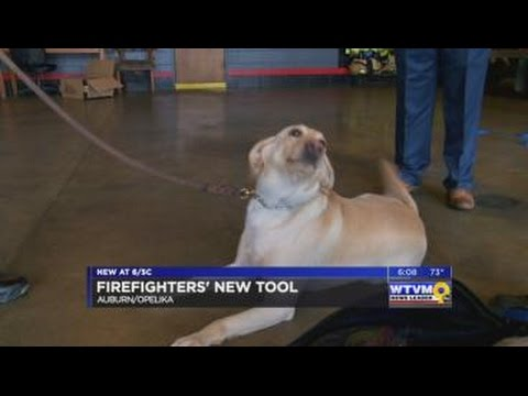 Auburn, Opelika firefighters get new tools to save animal lives