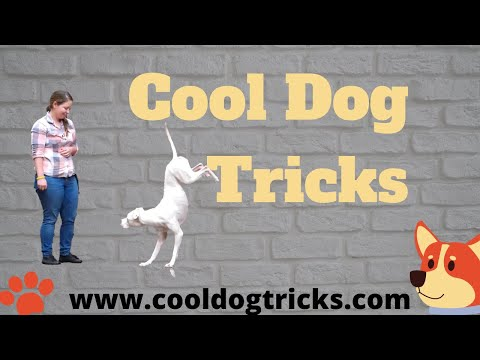Cool Dog Tricks