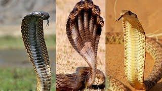 احذروا الثعابين والحيات فقد بدأ موسم خروجها !!