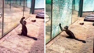 20 MOMENTS OF ANIMAL GENIUS THAT WILL AMAZE YOU