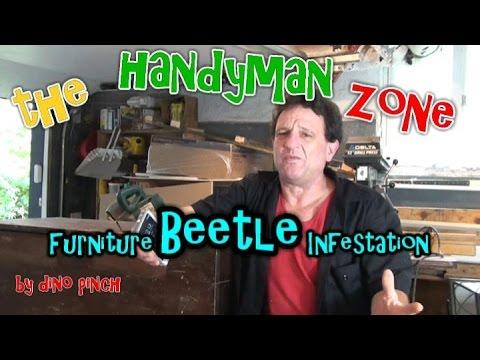 Furniture Beetle... Destroyer
