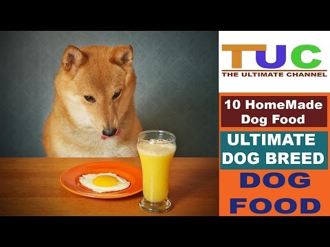 10 Homemade Dog Food In Hindi | Dog Facts | Popular Dogs | The Ultimate Channel