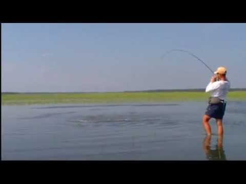 Tailing Redfish - Red Hot Fishing Action in Beaufort, SC